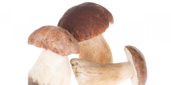 Czy grzyby posiadają wartości odżywcze?